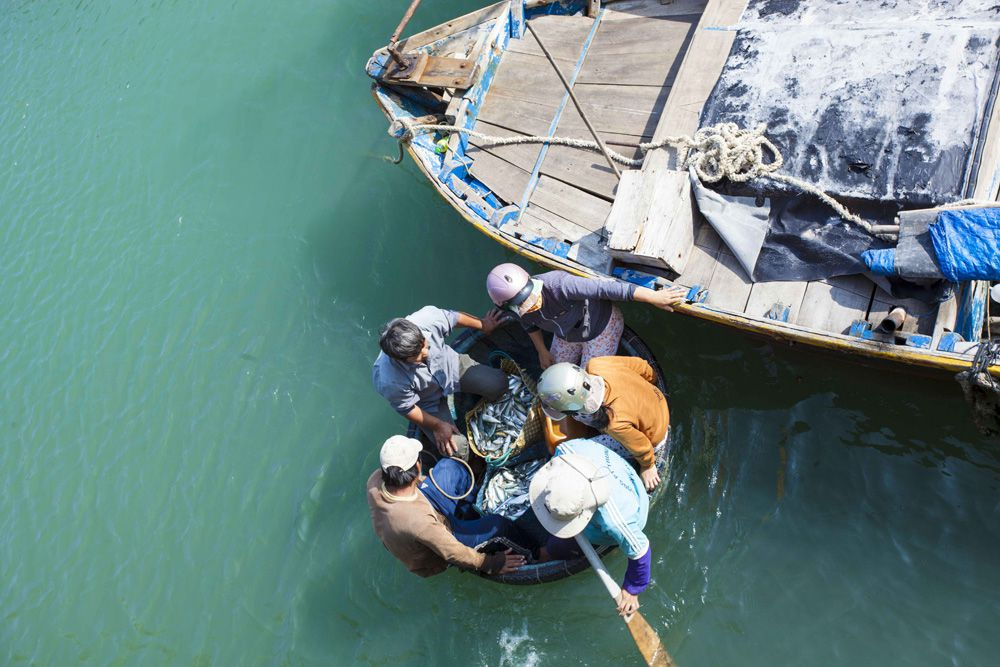 Thuyền cá về cảng