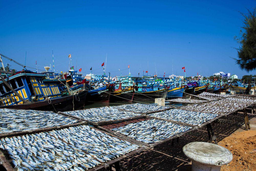 Cảng cá